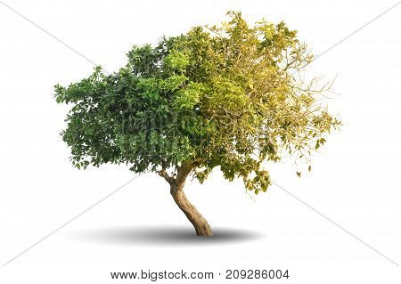 3d illustration of Tree isolated over white background