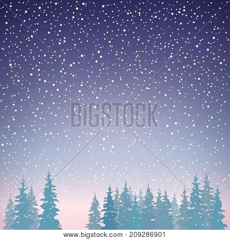 Snowfall in the Forest Snow Falls on the Spruces Fir Trees in Winter in Snowfall Winter Background Christmas Winter Landscape in Purple Shades