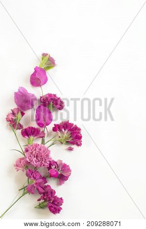 pattern of pink flowers on a white background