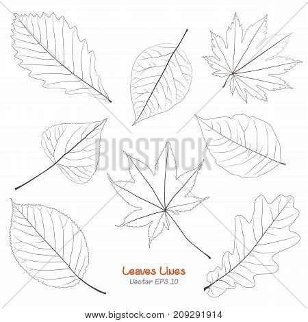 Vector set of leaves, collection of hand-drawn leaves