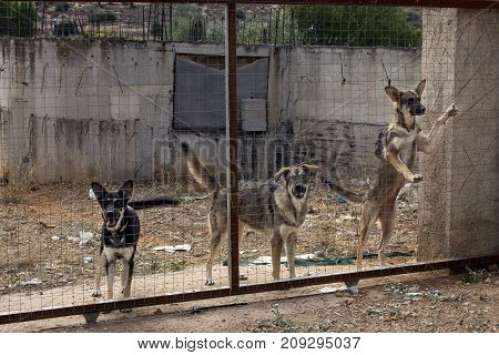 Many stray dogs locked behind mesh. Dog rescue concept