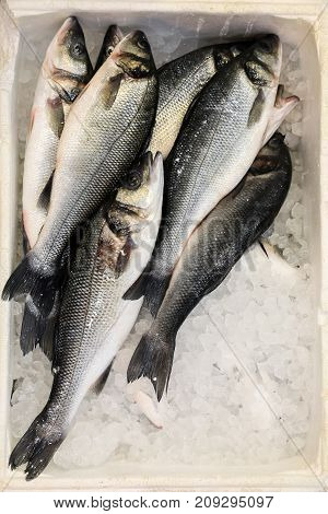 European Seabass On Ice In Fish Shop For Sale.