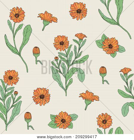 Colored botanical seamless pattern with blooming calendula plant, cut flower heads and buds hand drawn. Beautiful medicinal flowering herb. Vector illustration for textile print, wallpaper