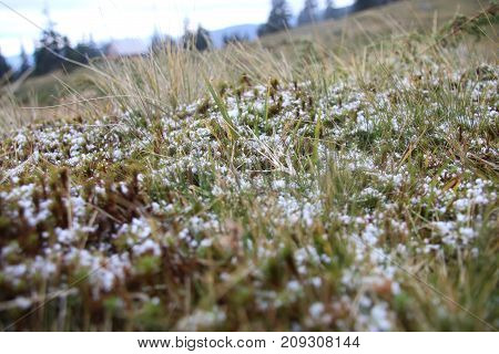 First snow in the grass. Cold or freezing concept.