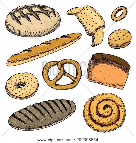 bread and pastry donut, long loaf, baguette and cupcake and sweet bun or pretzel. engraved hand drawn in old sketch and vintage style for poster, label and menu bakery shop. organic food of flour