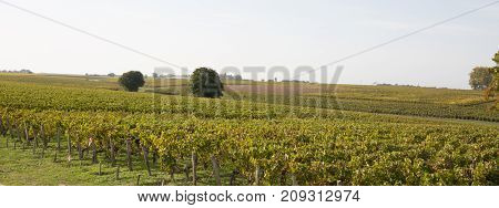 Panorama Of Wineyard Autumn Lights At Bordeaux France