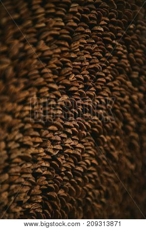 texture background of petals of cones. soft focus