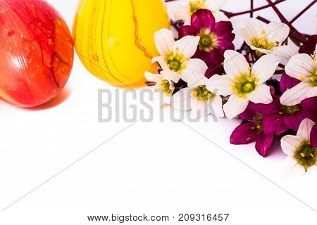 close-up of colorful easter eggs and saxifraga bryoides or mossy saxifrage flowers on white background with copy space. border template, easter greeting and holiday card.