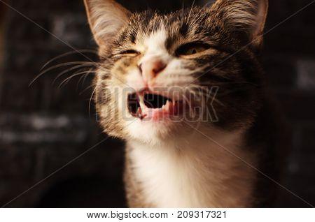 Successful shot. The cat yawned. Cat. A pet.