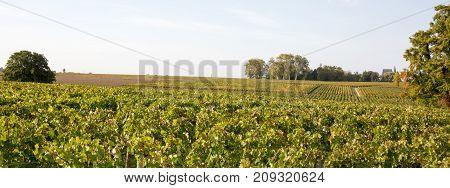 a Wineyard Autumn Lights at Bordeaux France