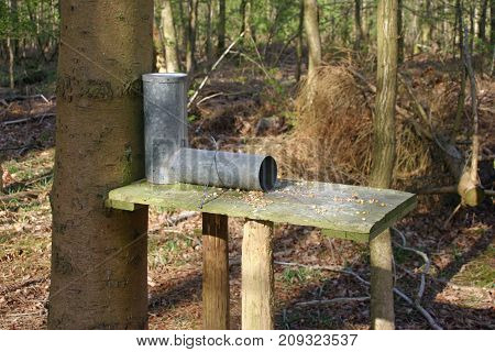 Gamebird Feeder In Woodland