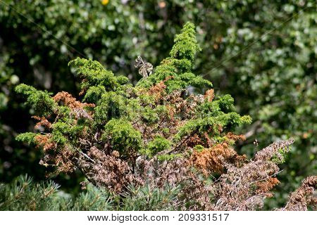 Background texture of green and purple vegetation