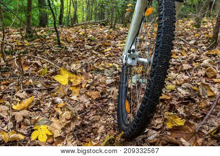The front wheel of a mountain bike drives over yellow leaves. The forest has autumn coulors Denmark October 16 2017