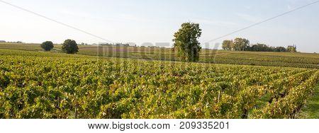 Sunrise Over Grape Wineyards In Bordeaux Area, France, Europe