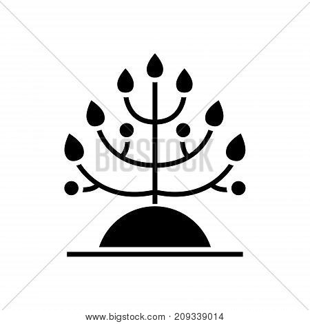 plant - biology icon, illustration, vector sign on isolated background