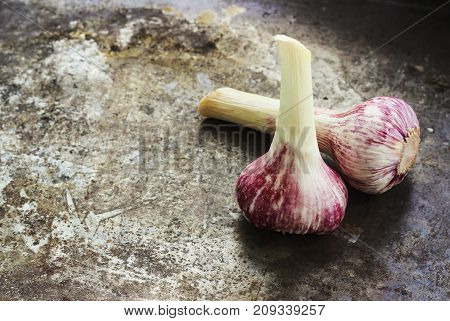 Fresh young garlic bulbs on a metal grunge rusty background selective focus