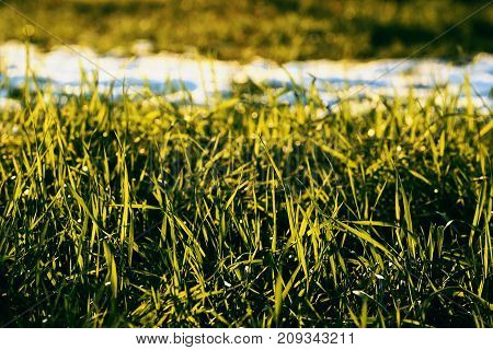 Green Grass And Snow
