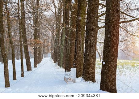 Snowfall in early November winter in Catherine Park of Tsarskoye Selo in Pushkin Saint Petersburg Russia. Alley with trees in Park covered with snow. Harsh Russian winter in St.-Petersburg