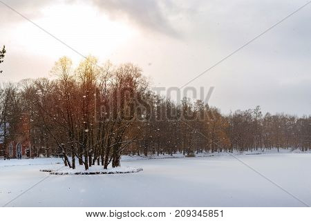 Frozen pond in snowfall in early November winter. Catherine Park of Tsarskoye Selo Pushkin Saint-Petersburg Russia. Coniferous trees in Park covered with snow. Harsh Russian winter