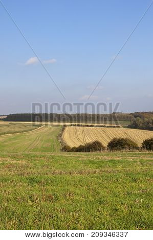 Larch Woodland And Fields