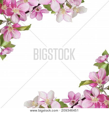 Floral frame with branches of cherry or apple tree with pink flowers and leaves in corners and space for text. Beautiful design for spring greeting card banner or design of napkin hanky