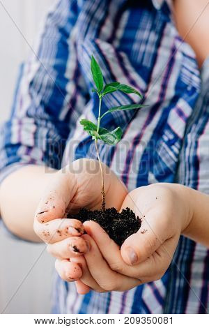 Plant in hands - growth and protection concept.