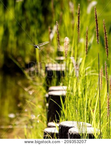 A dragonfly flying away above a scenic pond.