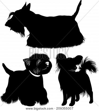West Highland White Terrier. Dogs. papillon dog. Scotch Terrier.