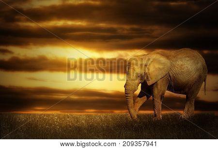 Photo manipulation of elephant in sunset landscape