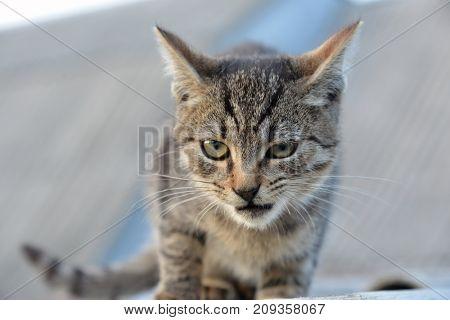 cat street robber