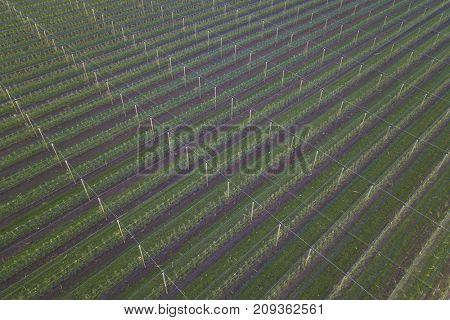 Apple farm protection against hail