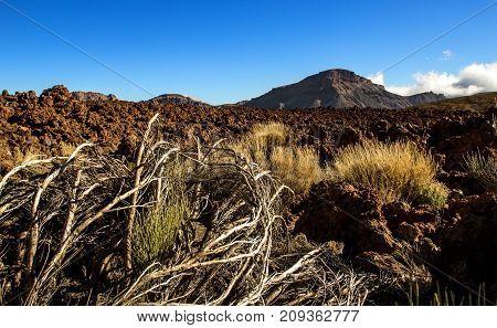 Lava Fields On The Volcano Teide, Canary Islands