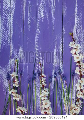 purple wooden background with apricot branches and blue flowers empty space at the top