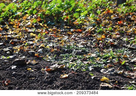 Deciduous Litter From Mix Of Fallen Autumn Leaves On Black Ground On The Background Of Green Grass.