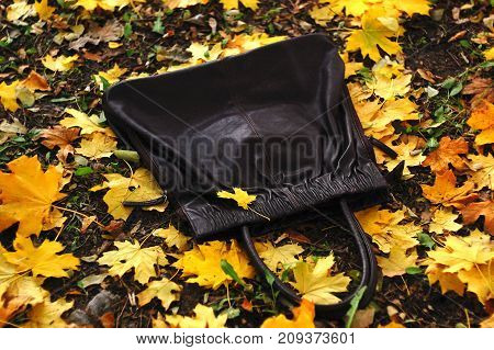 Black handbag on the ground covered by golden fallen autumn leaves of maple. Autumn mood.