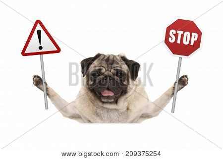 smiling pug dog holding up red stop and exclamation mark sign isolated on white background