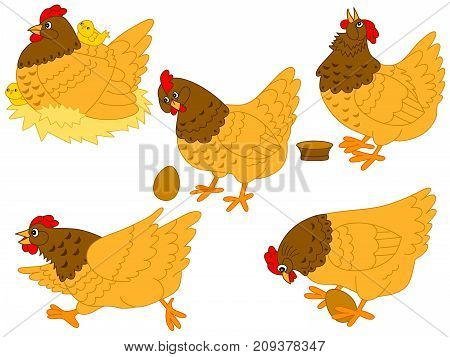 Vector set of cute cartoon hens, chickens and eggs. Vector hen and chicken. Hens and chickens vector  illustration