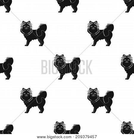 Spitz single icon in black style.Spitz vector symbol stock illustration .