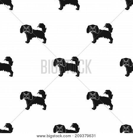 Spaniel, single icon in black style.Spaniel vector symbol stock illustration .