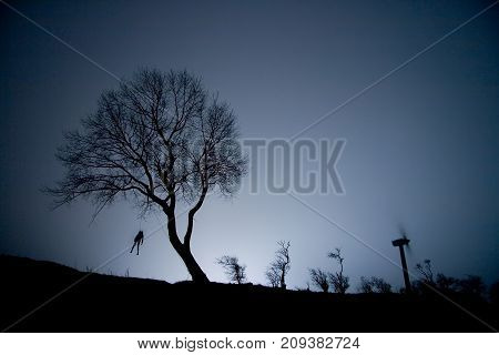 Hanged, Hung Man On A Tree At Night