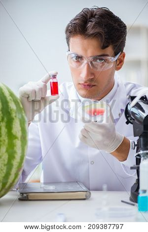 Scientist testing watermelon in lab