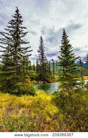 Magnificent journey through the Rocky Mountains of Canada. Shallow-water lakes, firs and mountains. The valley along the Pocahontas road. Concept of active and ecological tourism