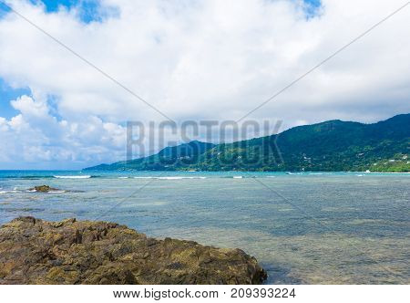 Summer Jungle Panorama