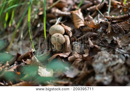 Rain mushrooms growing in forest. Beautiful forest landscape with mushrooms grow