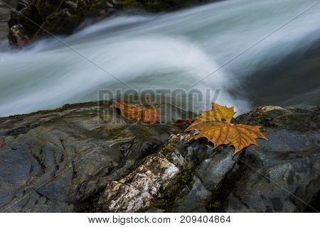 Smooth flowing water falling over rocks downstream in forested environment landscape scene