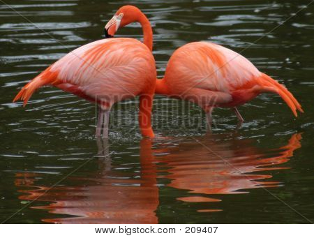 A Pair, In Pink