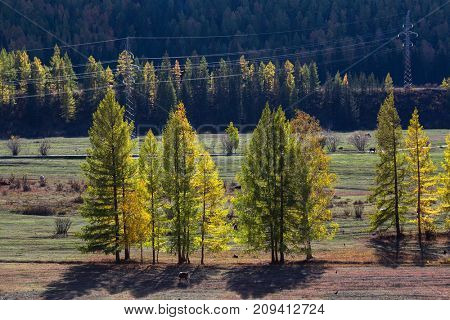 Views of the landscapes of the Altay Mountains in autumn, Altai Republic, Russia.
