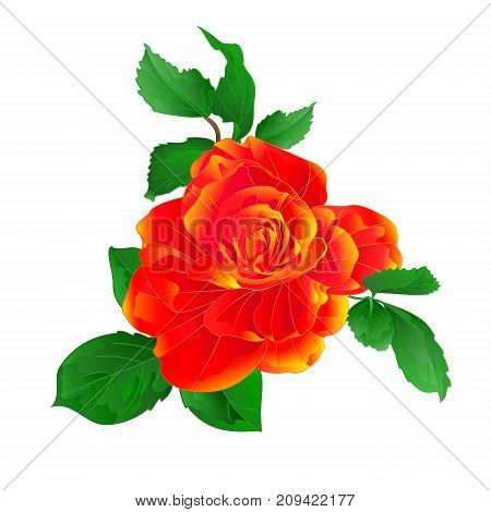 Stem flower orange rose and leaves vintage on a white background vector illustration editable hand draw