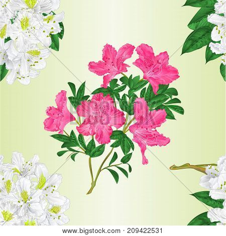 Seamless texture branch White and pink flowers rhododendron vintage vector editable illustration hand draw