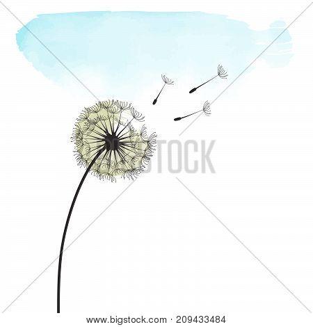 delicate stylized dandelion, illustration in vector format